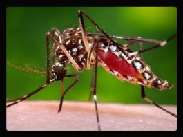 Dengue 1